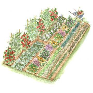 veggie_garden_plan