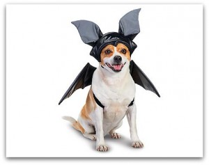 dog 300x237 Petco: Save up to 20% on the Howloween Sale