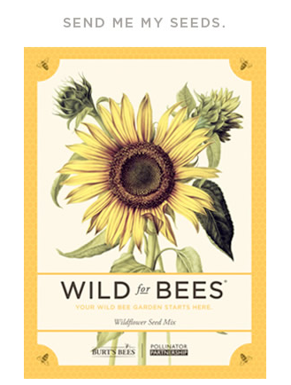 bees2 FREE Pack of Burts Bees Wildflower Seeds