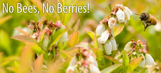 No Bees No Berries
