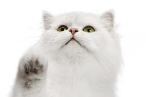 broths_form_cat