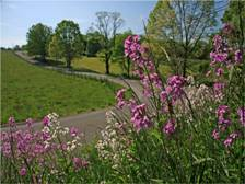FREE 2015 Roadsides in Bloom Calendar!