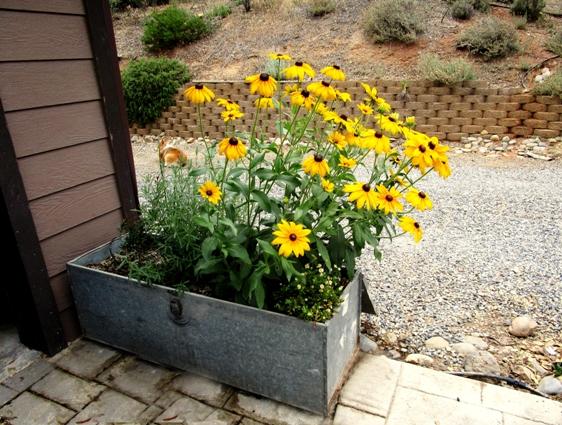 Toolbox planter