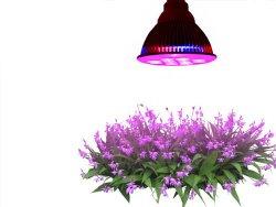 grow lamp