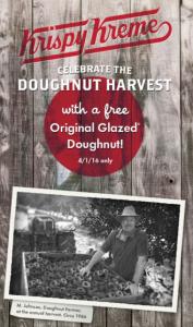 kk doughnut harvest